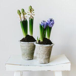Plants, Pots and Terrariums