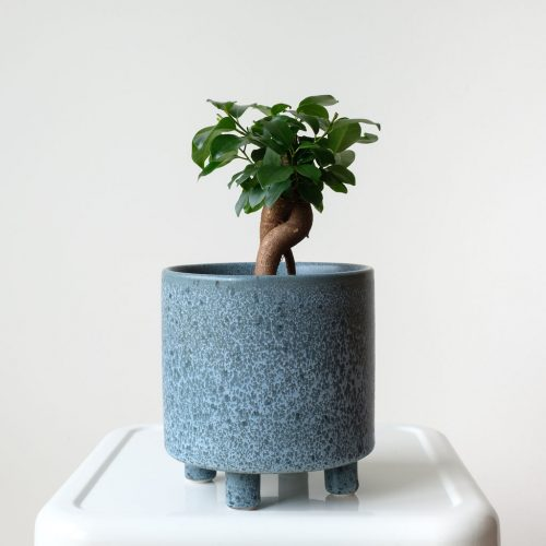Bonsai blue pot